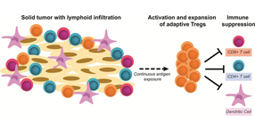 Adaptive Treg cells are induced in the tumor microenvironment. Vol. 14, Iss. 1, Role for the cAMP-Protein Kinase A Signaling Pathway in Suppression of Antitumor Immune Responses by Regulator...