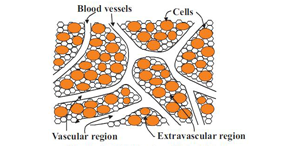 Schematic view of biological tissue. JPM Vol.12, Issue4, A Macroscopic Model for Countercurrent Bioheat Transfer in a Circulatory System